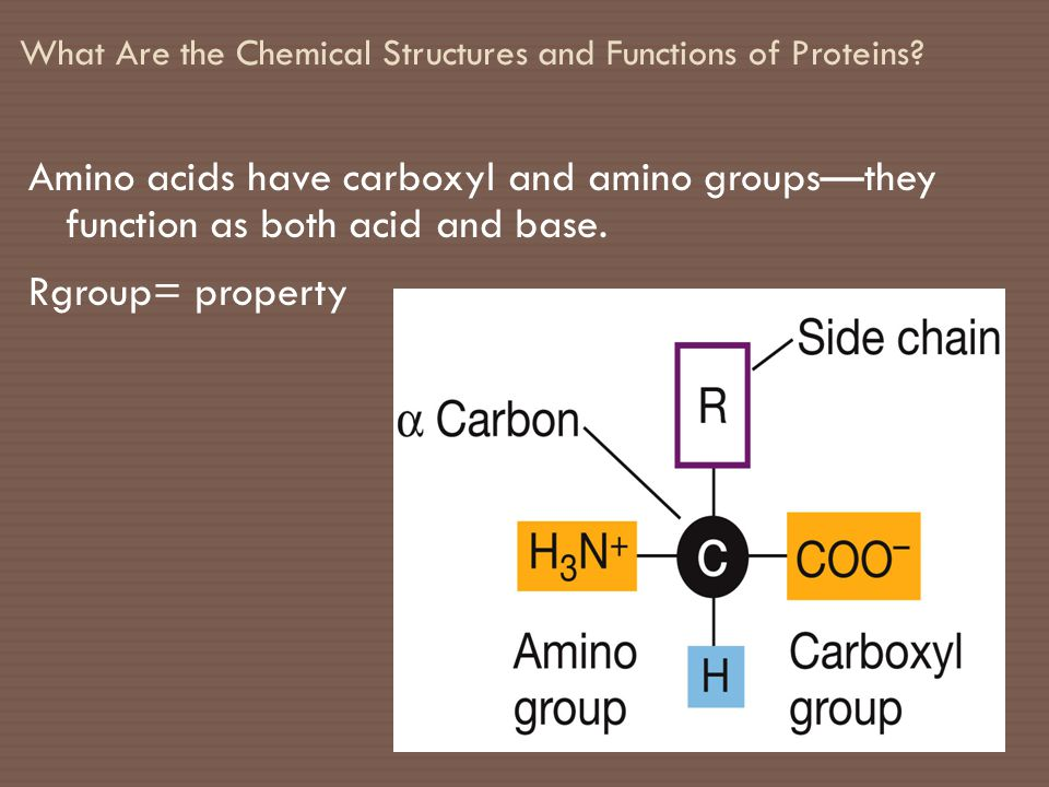 What Are the Chemical Structures and Functions of Proteins