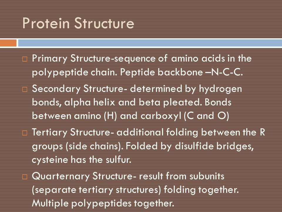 Protein Structure Primary Structure-sequence of amino acids in the polypeptide chain. Peptide backbone –N-C-C.
