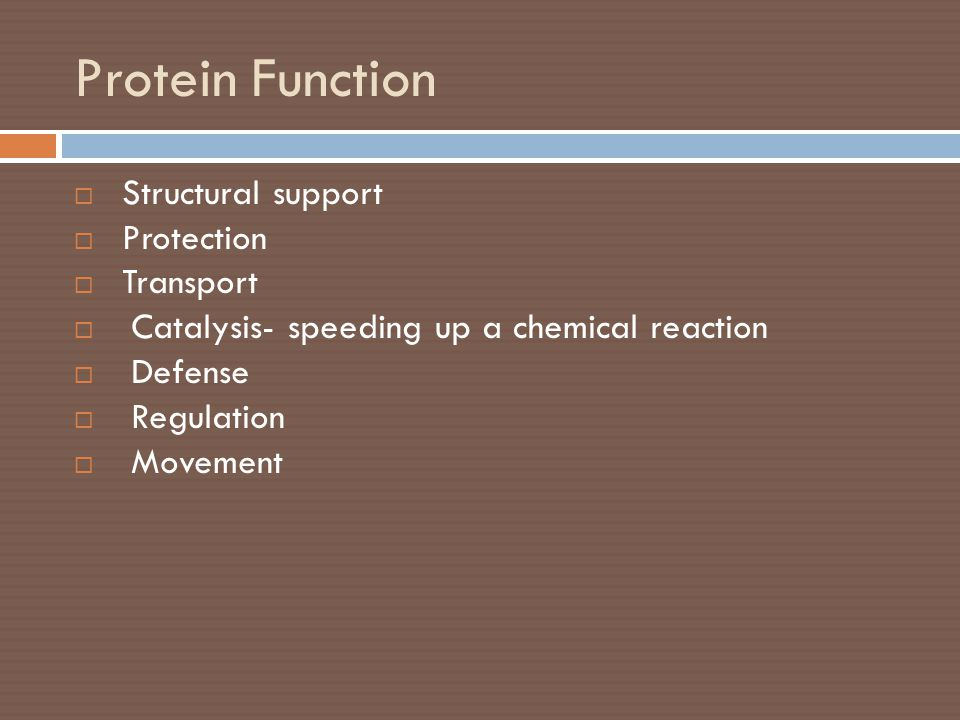 Protein Function Structural support Protection Transport