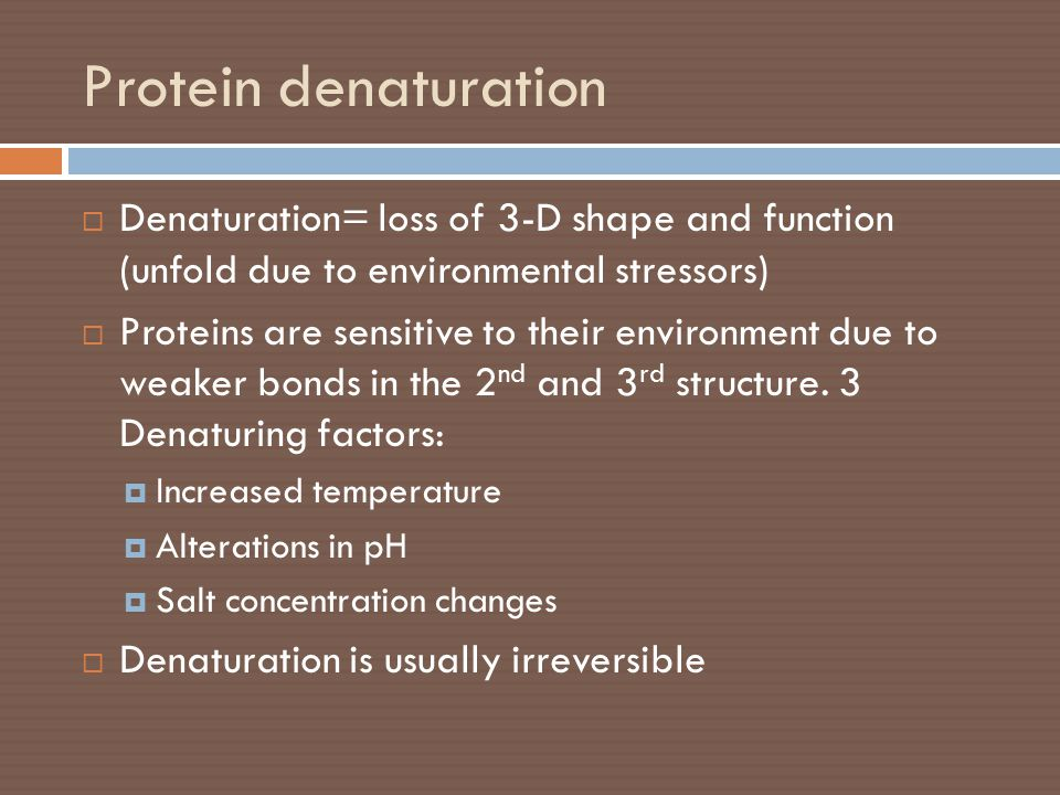 Protein denaturation Denaturation= loss of 3-D shape and function (unfold due to environmental stressors)