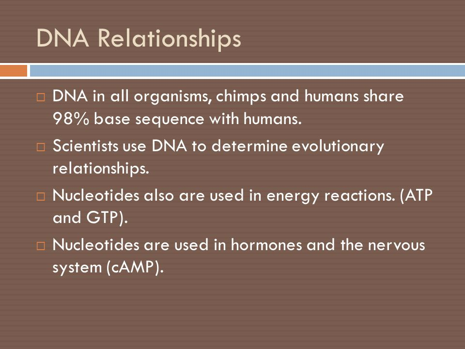 DNA Relationships DNA in all organisms, chimps and humans share 98% base sequence with humans.