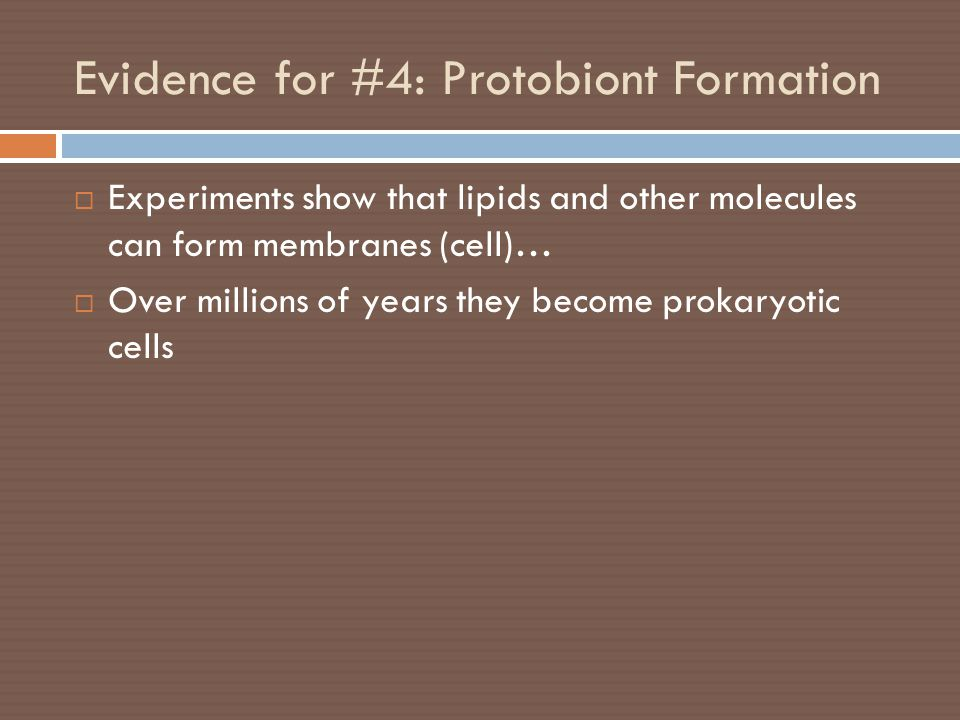 Evidence for #4: Protobiont Formation