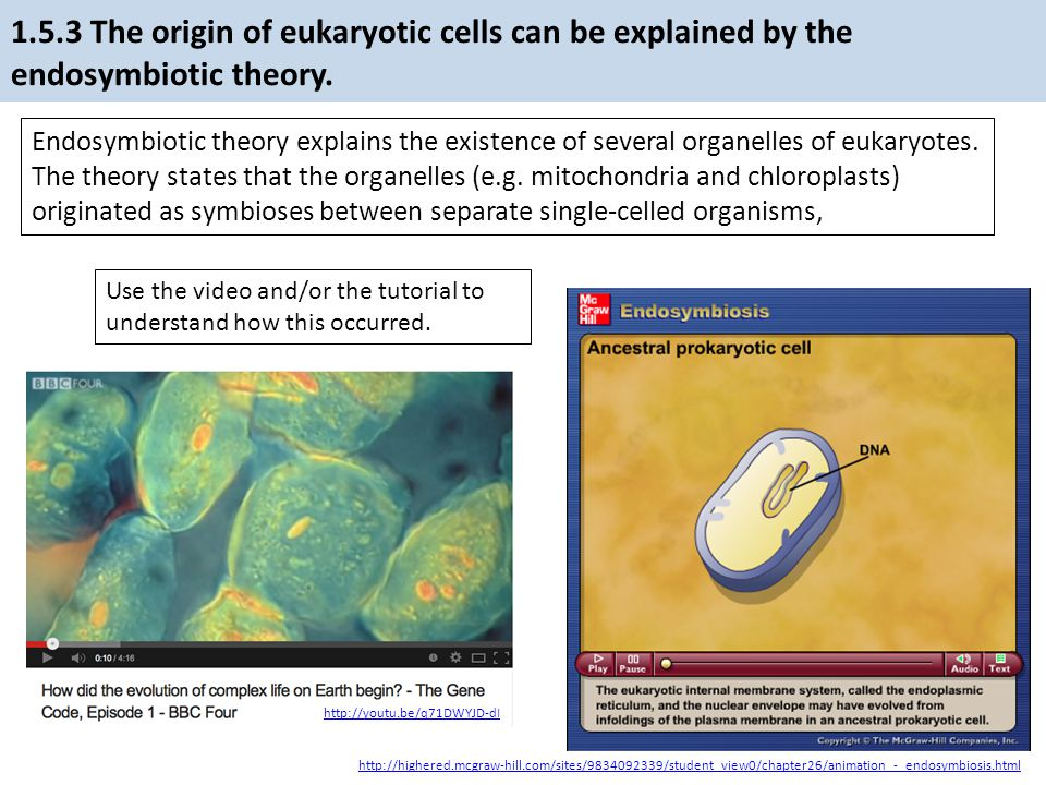 1.5.3 The origin of eukaryotic cells can be explained by the endosymbiotic theory.