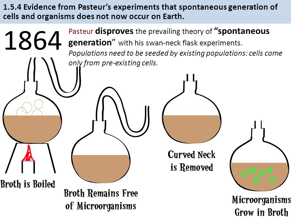1.5.4 Evidence from Pasteur's experiments that spontaneous generation of cells and organisms does not now occur on Earth.
