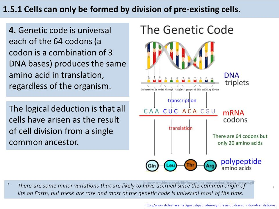 1.5.1 Cells can only be formed by division of pre-existing cells.