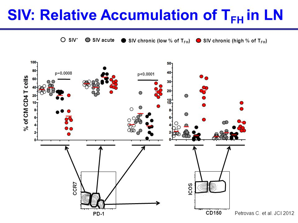 SIV: Relative Accumulation of TFH in LN