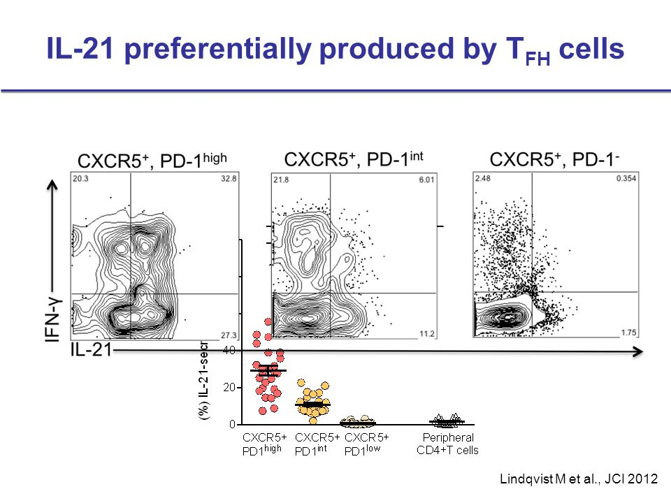 IL-21 preferentially produced by TFH cells