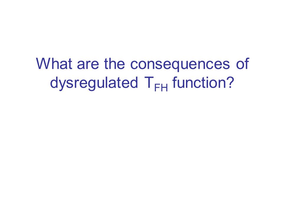 What are the consequences of dysregulated TFH function
