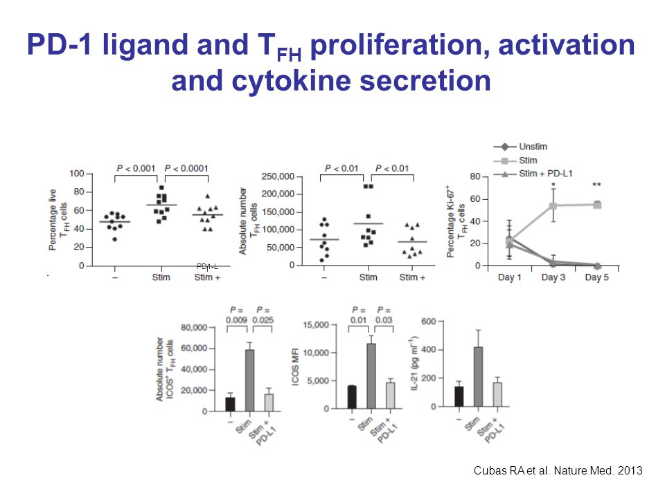 PD-1 ligand and TFH proliferation, activation and cytokine secretion