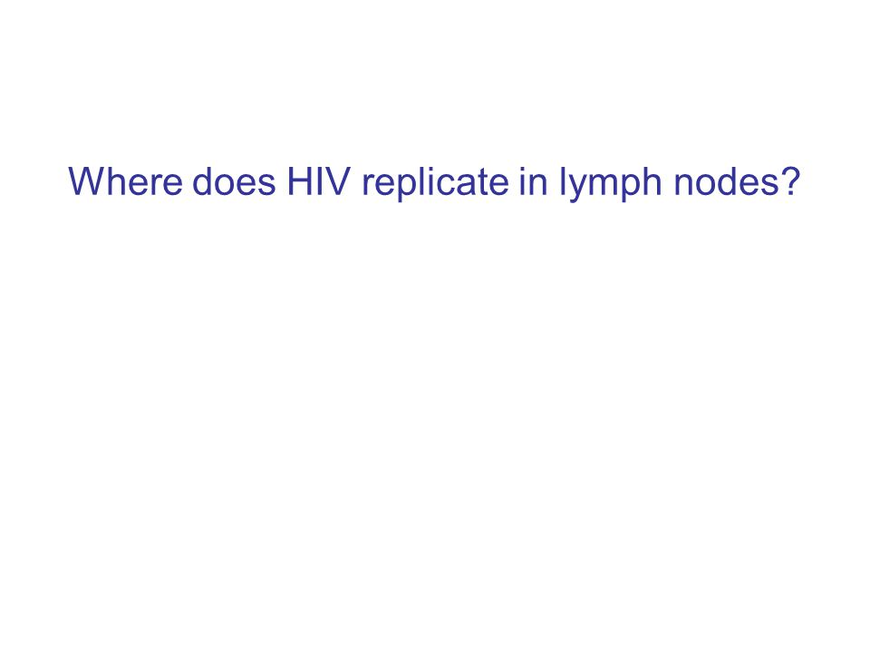 Where does HIV replicate in lymph nodes
