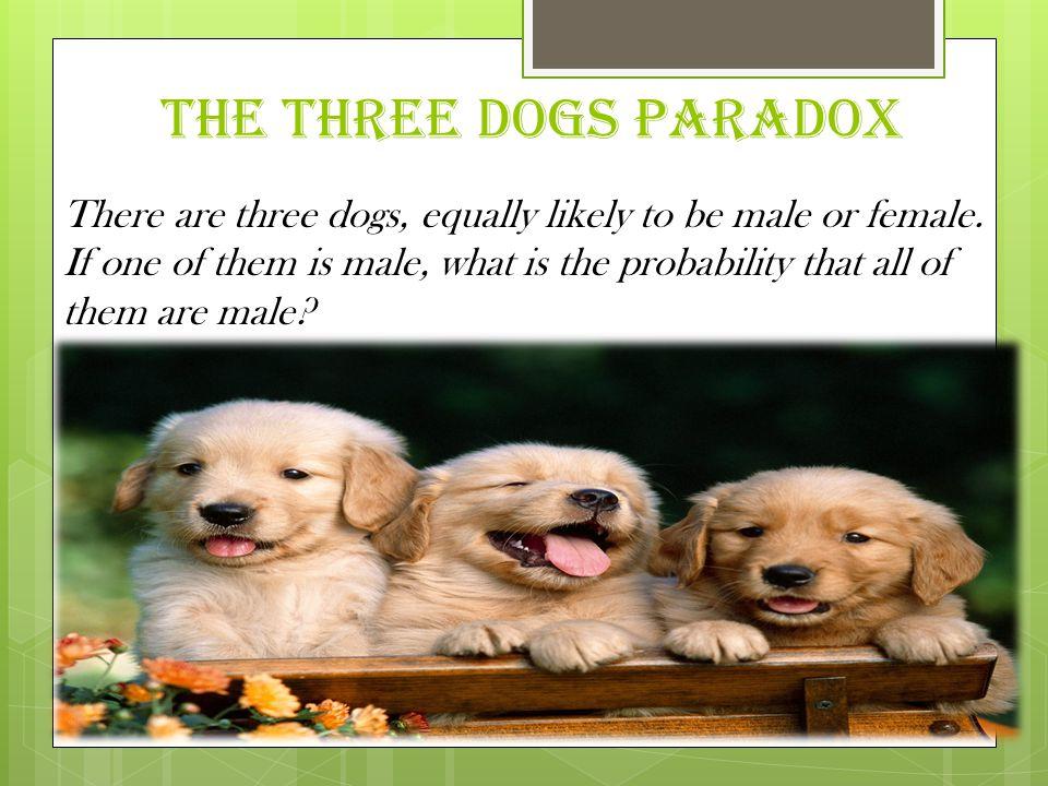 THE THREE DOGS PARADOX