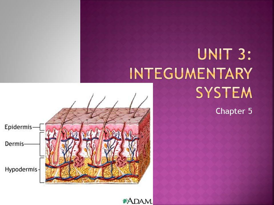 Unit 3: Integumentary System