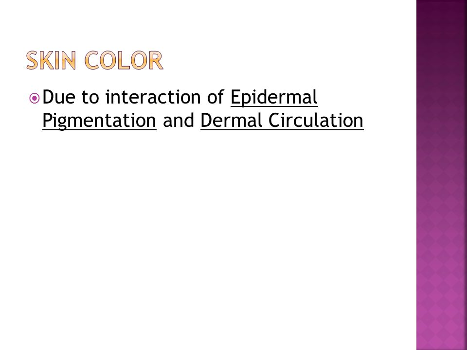 Skin Color Due to interaction of Epidermal Pigmentation and Dermal Circulation