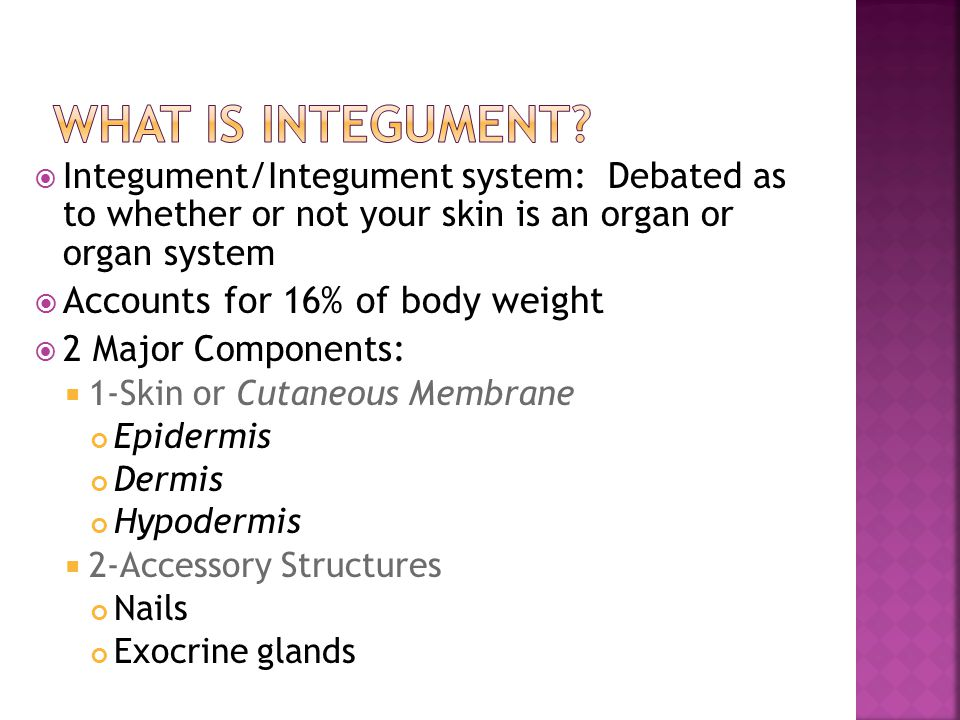 What is integument Accounts for 16% of body weight