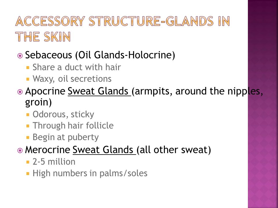 Accessory Structure-Glands in the Skin