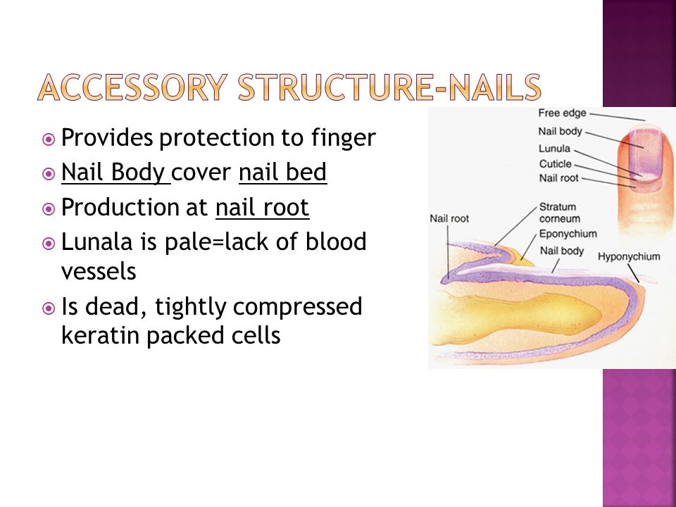 Accessory Structure-Nails