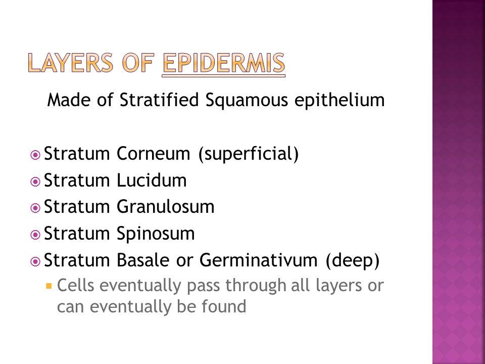 Made of Stratified Squamous epithelium