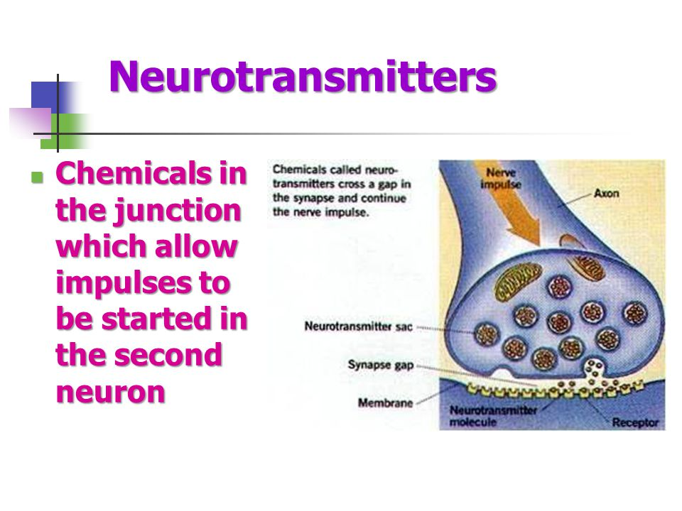 Neurotransmitters Chemicals in the junction which allow impulses to be started in the second neuron