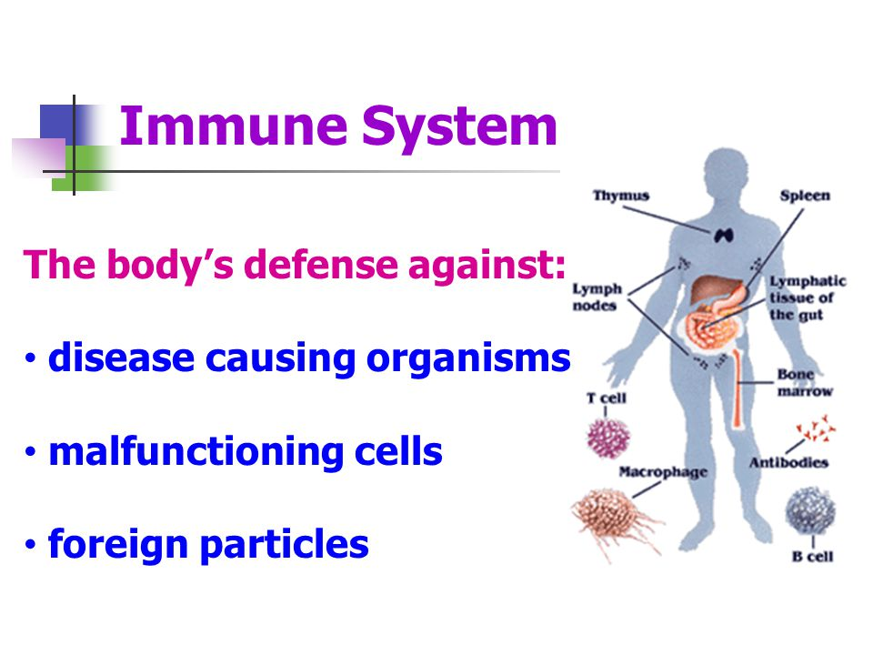 Immune System The body's defense against: disease causing organisms