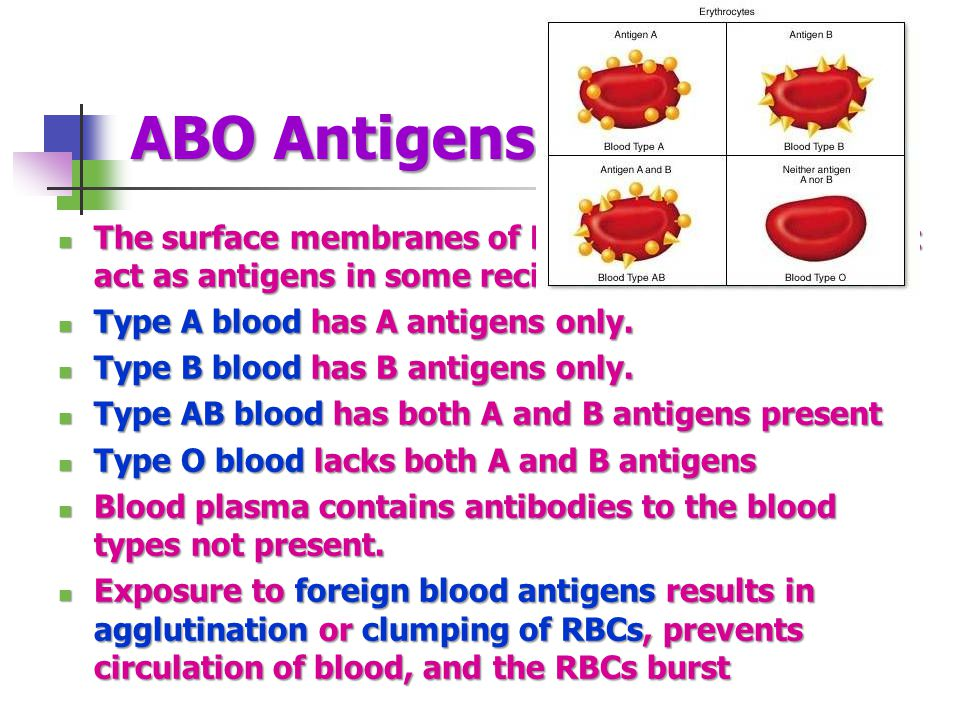 ABO Antigens The surface membranes of RBCs carry proteins that act as antigens in some recipients. Type A blood has A antigens only.