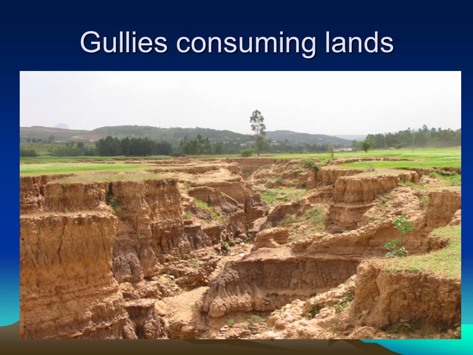 Gullies consuming lands