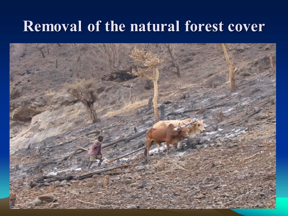Removal of the natural forest cover