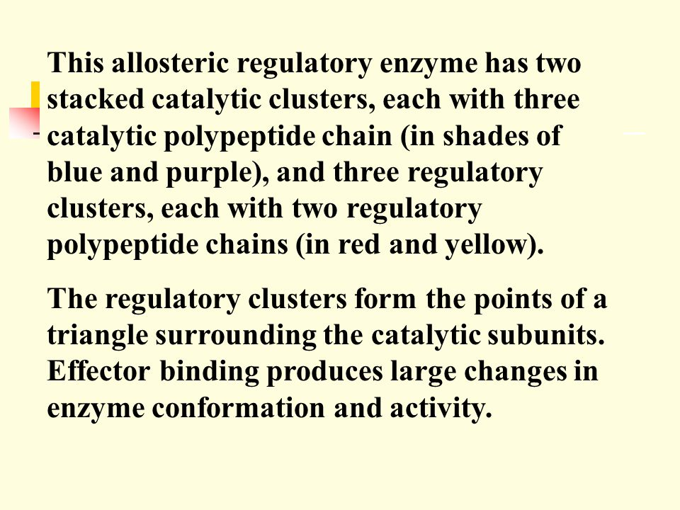 This allosteric regulatory enzyme has two stacked catalytic clusters, each with three catalytic polypeptide chain (in shades of blue and purple), and three regulatory clusters, each with two regulatory polypeptide chains (in red and yellow).