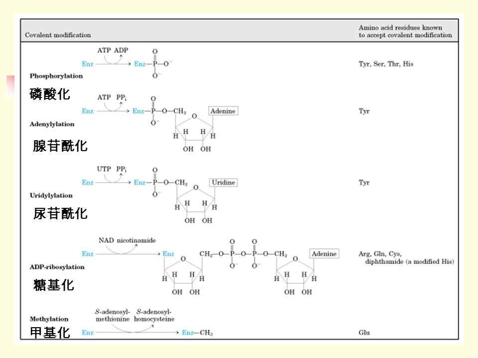 磷酸化 腺苷酰化 尿苷酰化 糖基化 甲基化