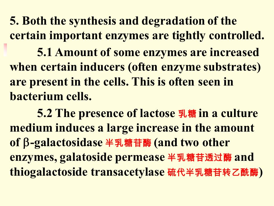 5. Both the synthesis and degradation of the certain important enzymes are tightly controlled.