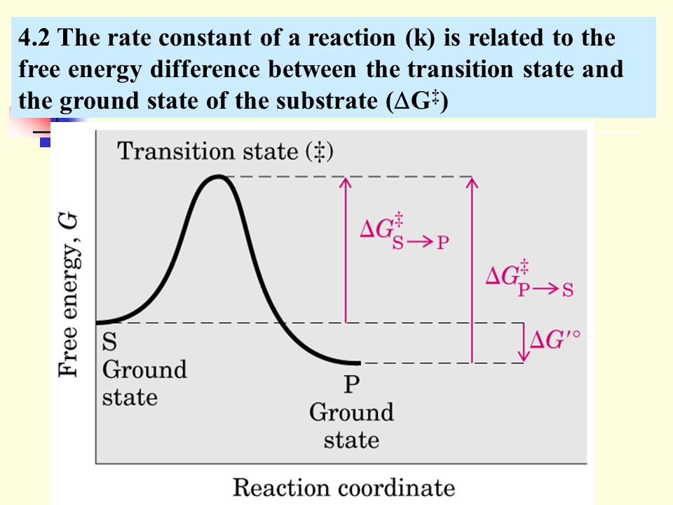 4.2 The rate constant of a reaction (k) is related to the free energy difference between the transition state and the ground state of the substrate (G‡)