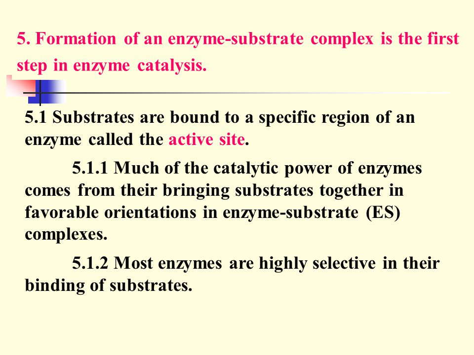 5. Formation of an enzyme-substrate complex is the first step in enzyme catalysis.