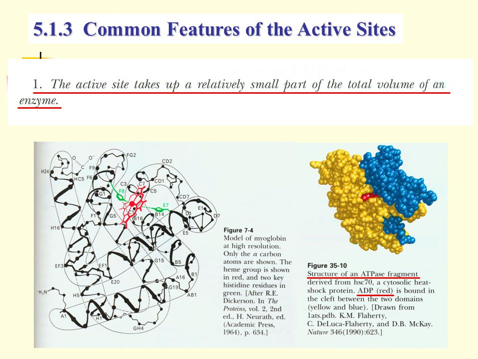 5.1.3 Common Features of the Active Sites