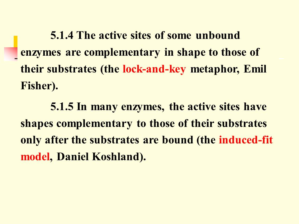 5.1.4 The active sites of some unbound enzymes are complementary in shape to those of their substrates (the lock-and-key metaphor, Emil Fisher).