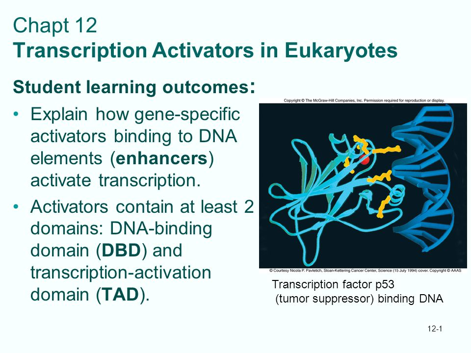 Chapt 12 Transcription Activators in Eukaryotes