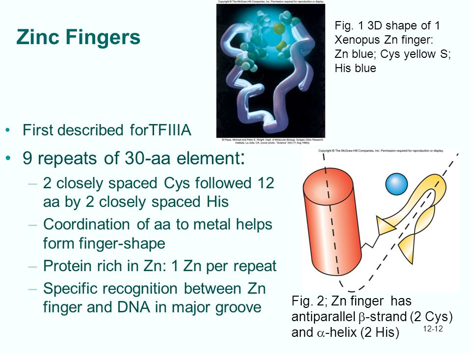 Zinc Fingers 9 repeats of 30-aa element: First described forTFIIIA