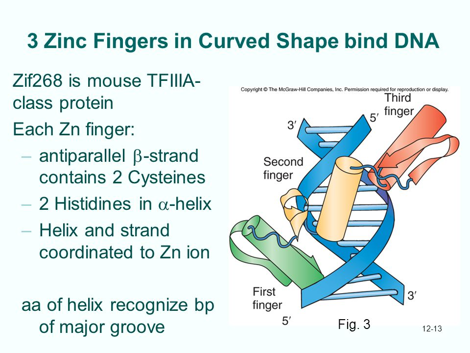 3 Zinc Fingers in Curved Shape bind DNA