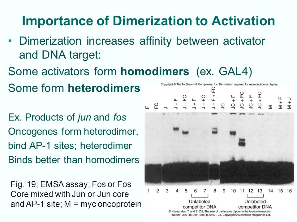 Importance of Dimerization to Activation