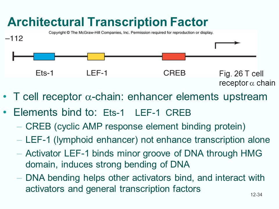 Architectural Transcription Factor