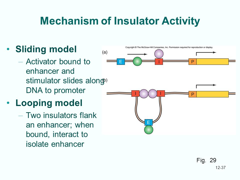 Mechanism of Insulator Activity