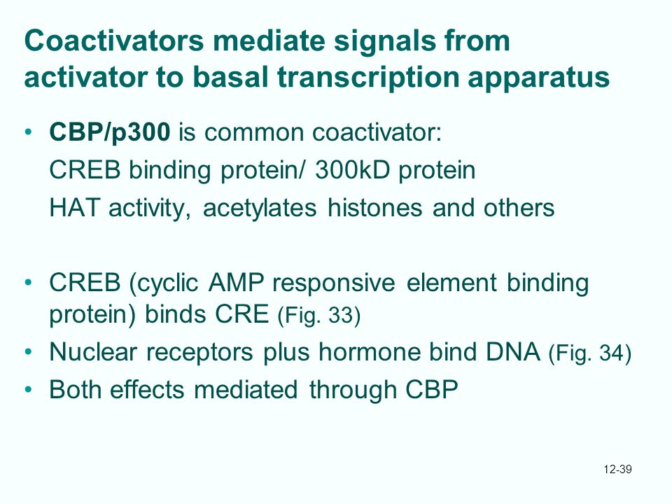 Coactivators mediate signals from activator to basal transcription apparatus