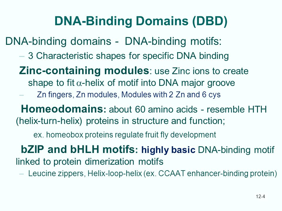 DNA-Binding Domains (DBD)