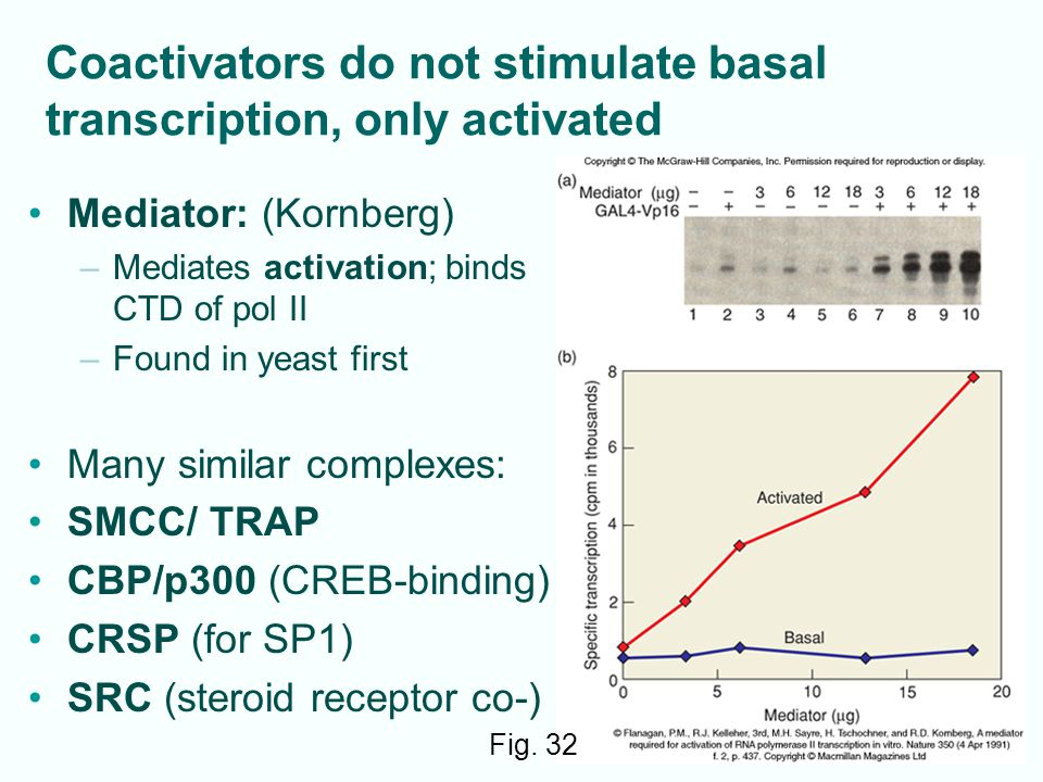Coactivators do not stimulate basal transcription, only activated