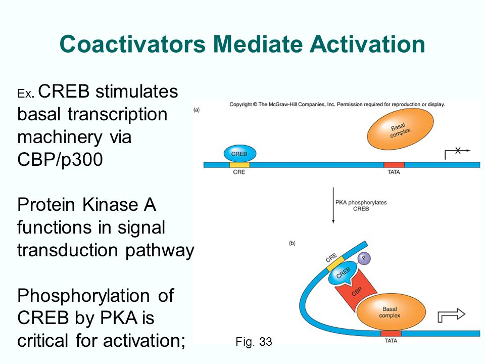 Coactivators Mediate Activation