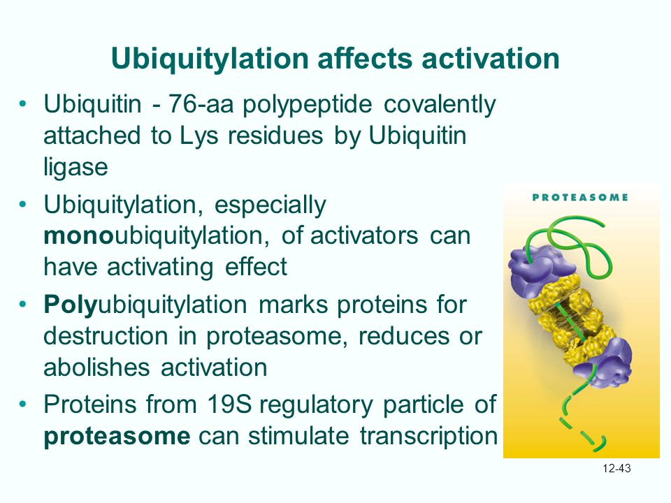 Ubiquitylation affects activation