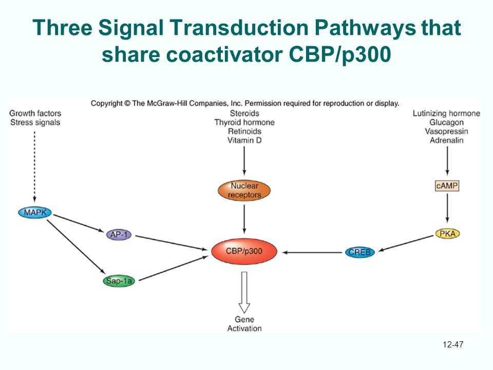Three Signal Transduction Pathways that share coactivator CBP/p300