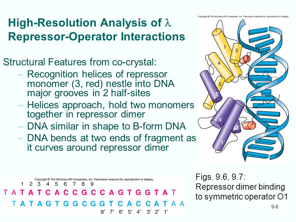 High-Resolution Analysis of l Repressor-Operator Interactions