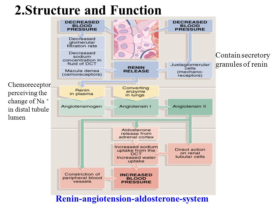 2.Structure and Function