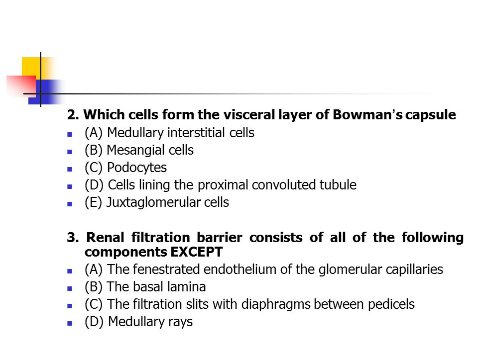 2. Which cells form the visceral layer of Bowman's capsule