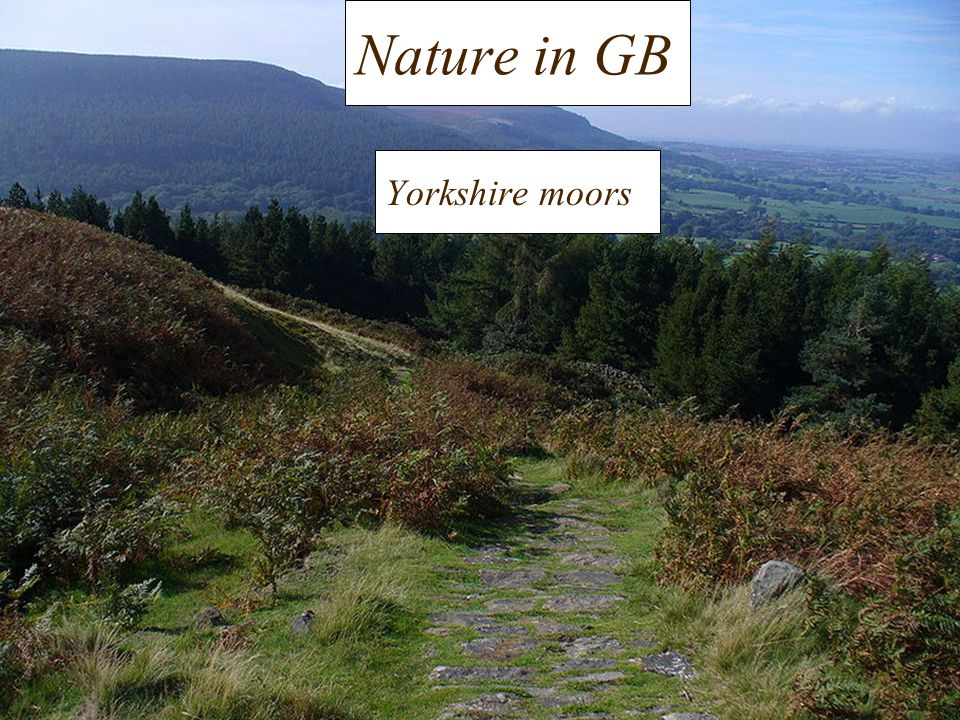 Nature in GB Yorkshire moors