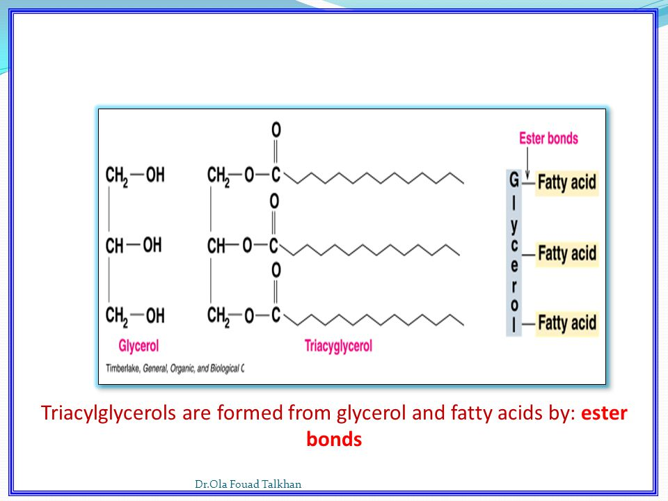 Triacylglycerols are formed from glycerol and fatty acids by: ester bonds